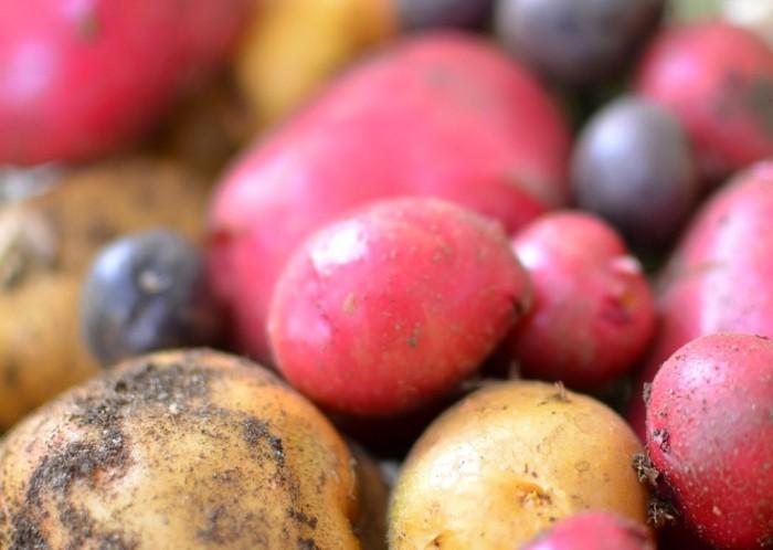 iguaria-cesto-de-batatas