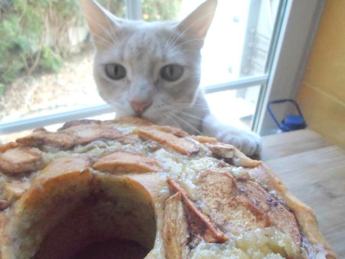 iguaria-bolo-macas-verdes-canela-gato