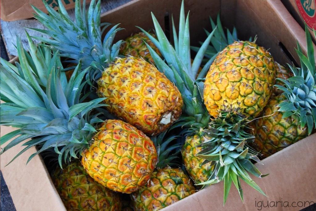 Iguaria_Dicas-com-Ananas