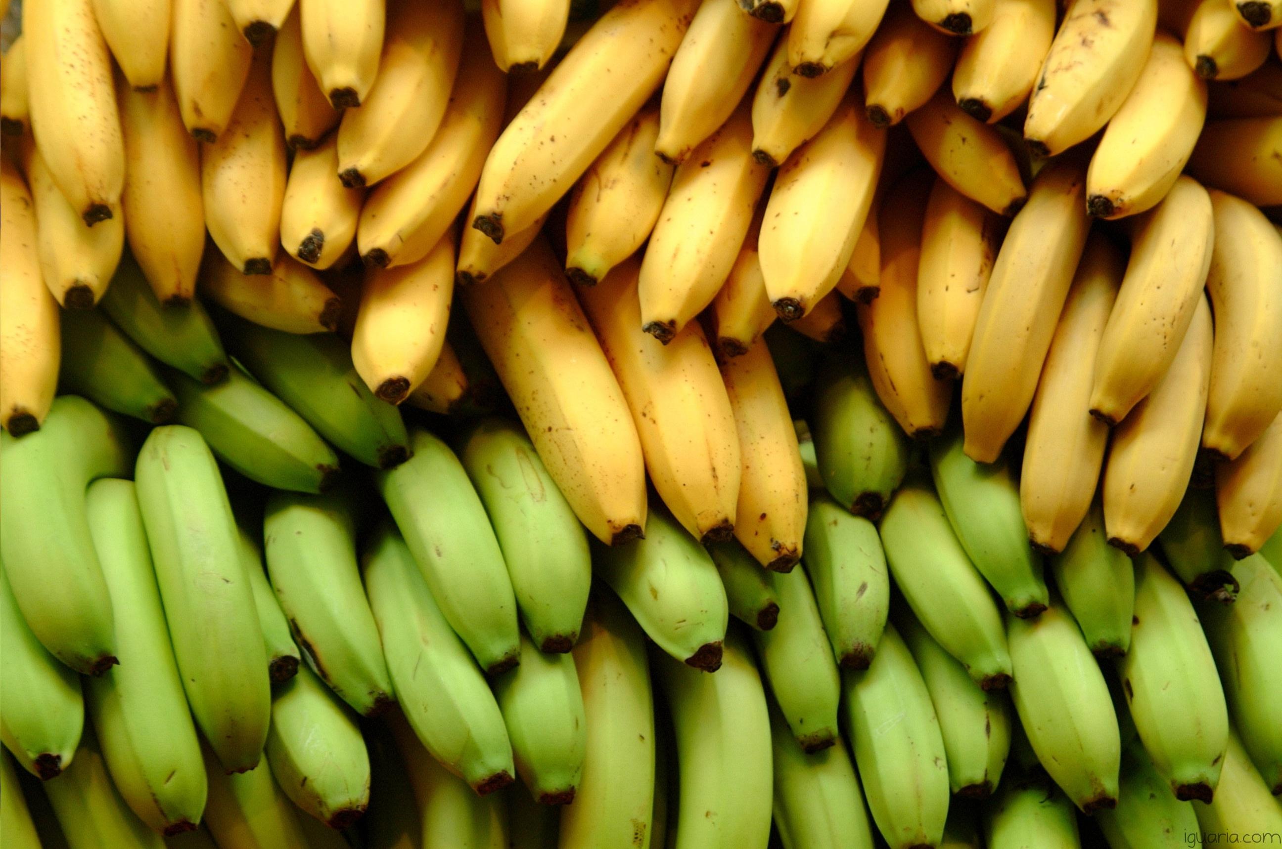 Iguaria_Varios-Tipos-de-Bananas