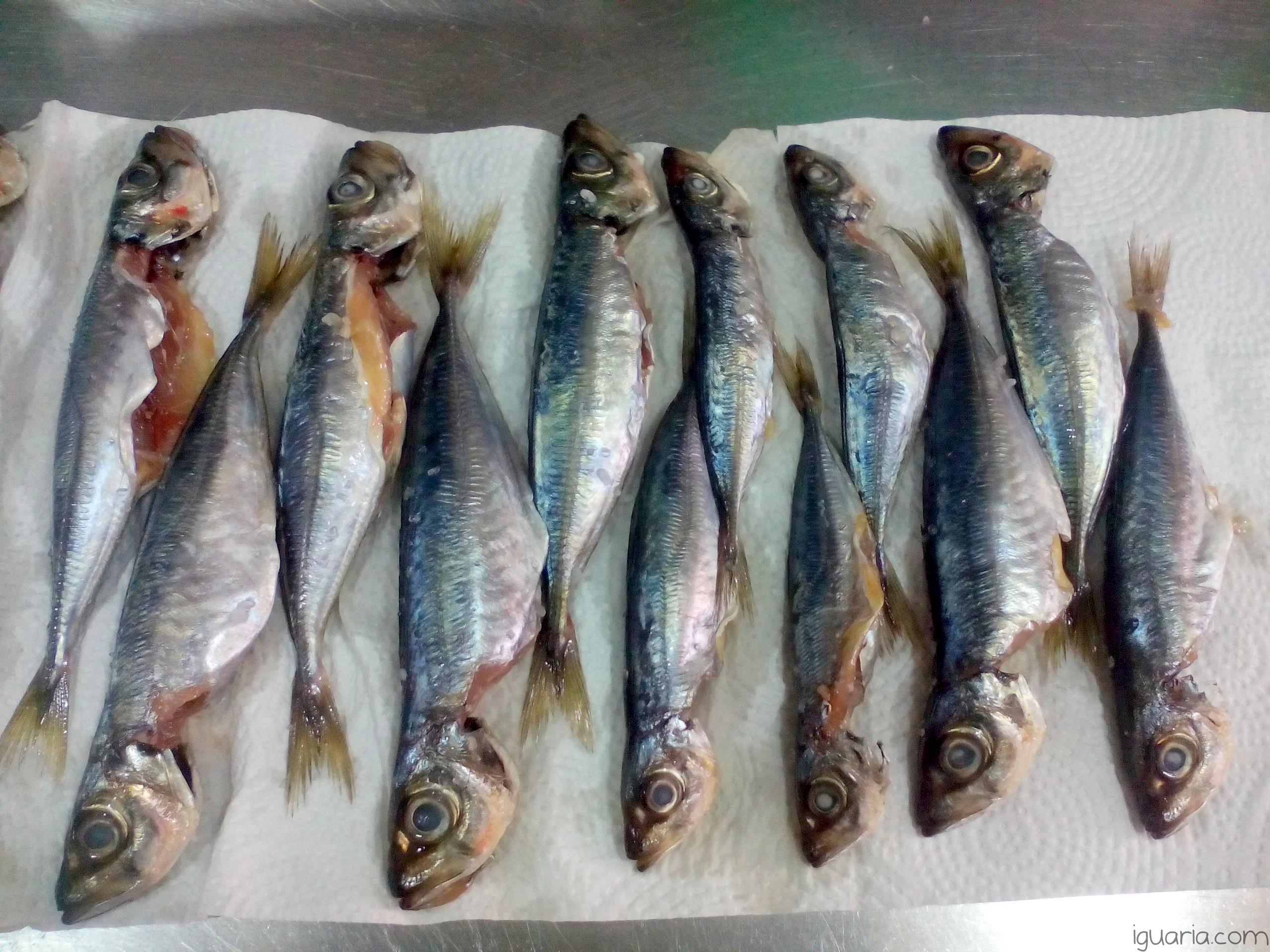 iguaria-sardinhas-limpas